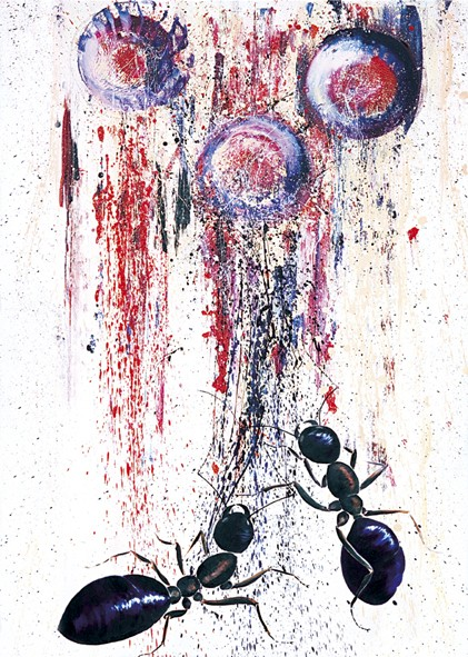 Poster Ameisen